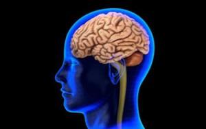 NSF Brain